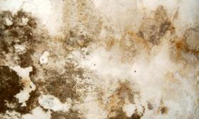 mold-damage-280